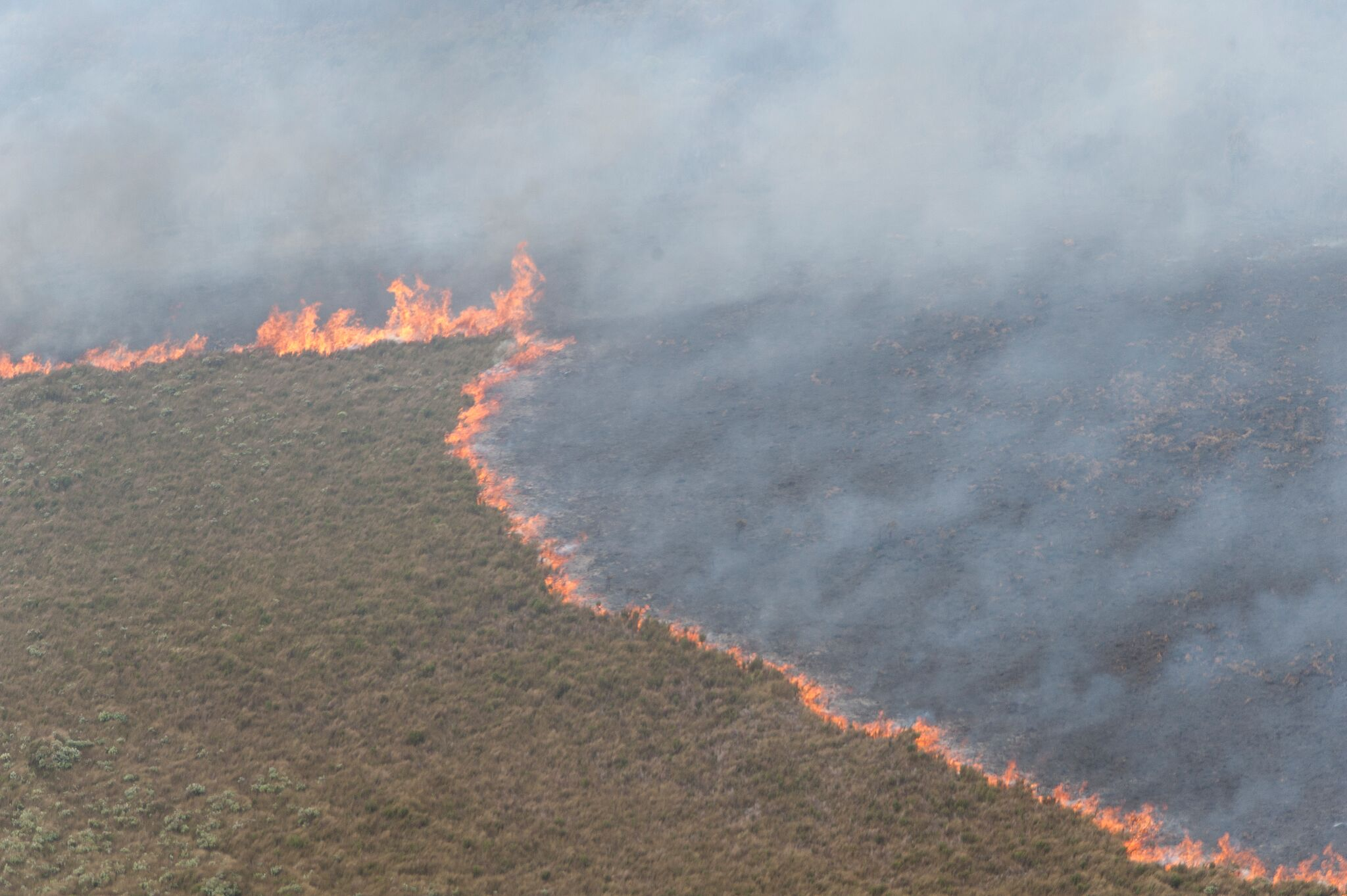 Firefighters deployed to help fight large wild fire in the Chathams icon